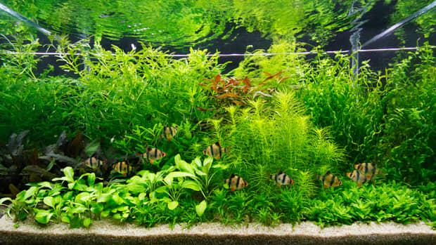 co2-in-a-planted-aquarium