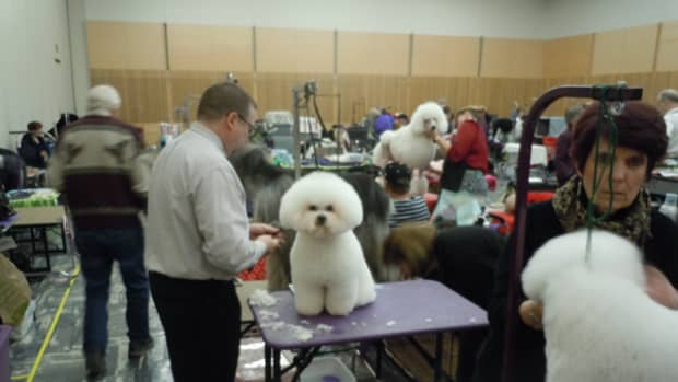 the-purpose-of-dog-clubs-and-dog-shows