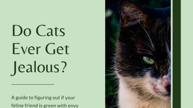 jealous-behavior-in-cats
