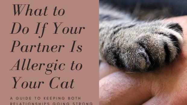 what-if-my-boyfriend-girlfriend-is-allergic-to-my-cat