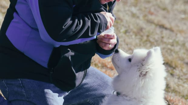 puppy-house-training-tips
