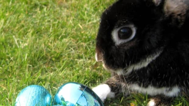 what-is-the-history-of-the-easter-bunny