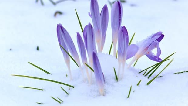 欧洲的春天仪式