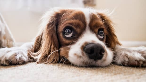 5-true-reasons-your-dog-is-not-responding-to-your-commands