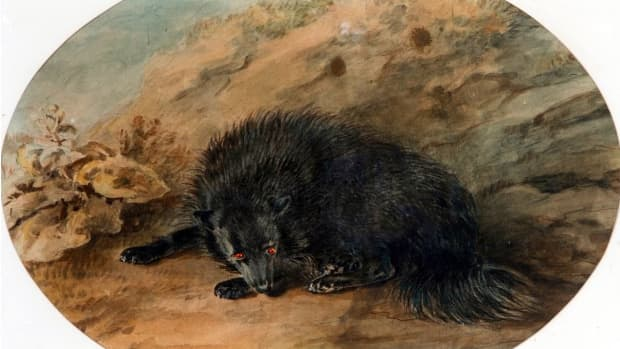 the-fiendish-black-dog-of-british-folklore