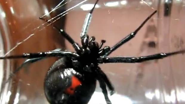 the-top-ten-list-of-the-absolute-best-giant-bug-movies