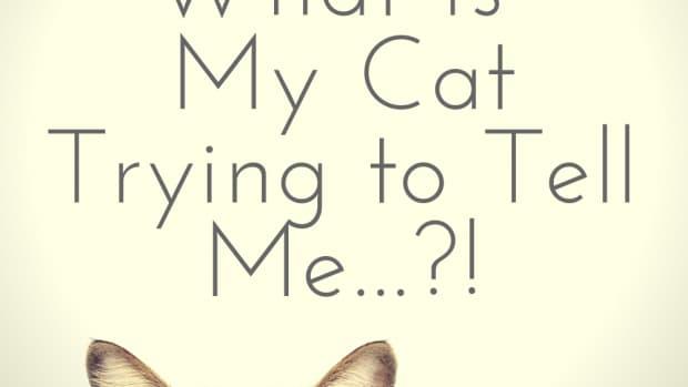 cats-speak