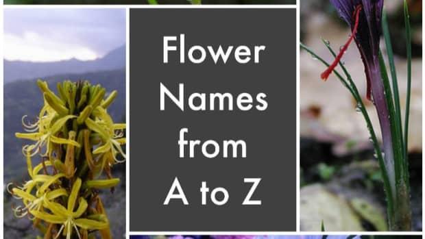 list-of-flower-names