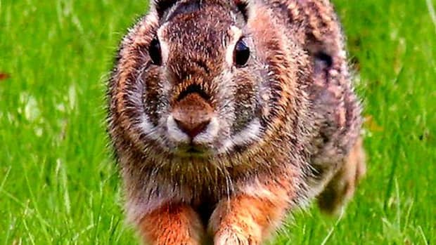the-importance-of-a-rabbits-diet