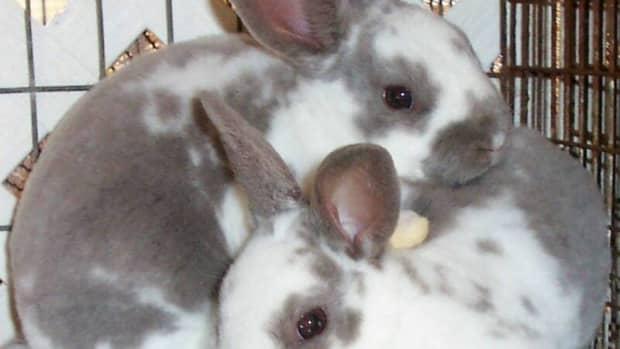 Image from Fancy Free Rabbitry fancyfreerabbitry.homestead.com