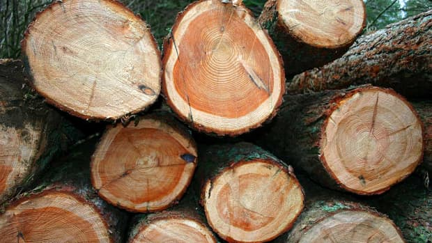 ten-reasons-to-burn-wood