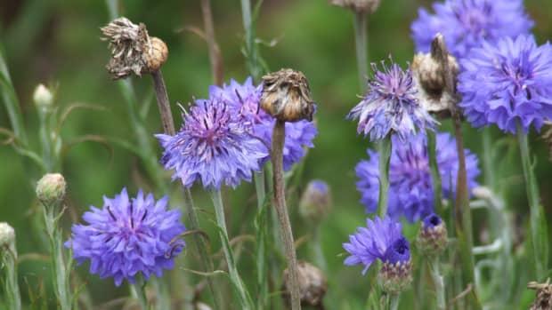 natural-herbal-cures