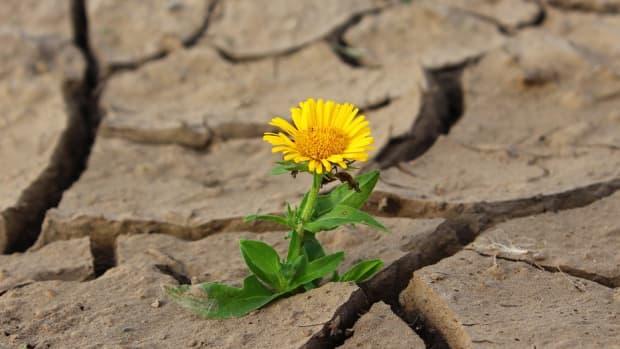 natures-secret-is-patience