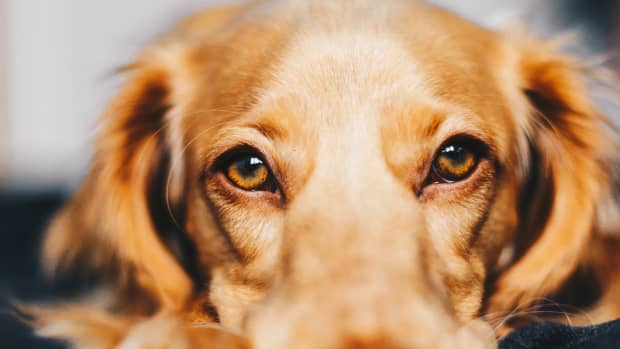 canine-urinary-tract-infections-are-all-those-expensive-tests-really-necessary