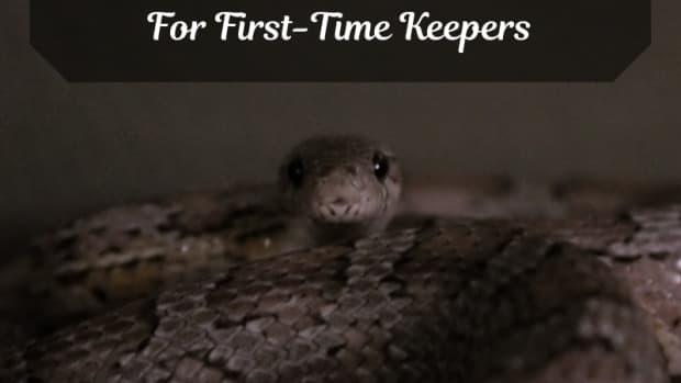 choosing-your-first-pet-snake