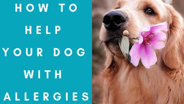 help-my-dog-has-allergies
