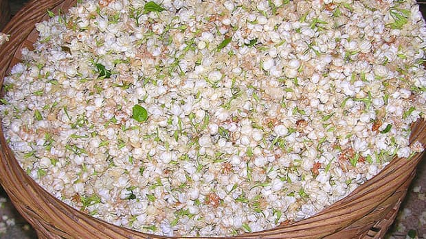 Picked jasmine flowers. This image is in the public domain.