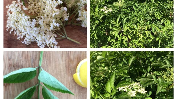 how-to-make-elderflower-cordial-a-refreshing-summer-drink
