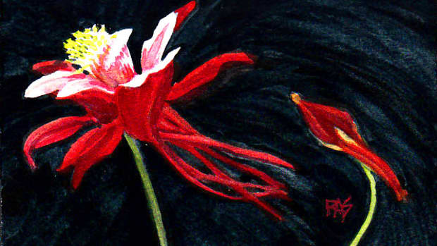 """Columbine, 4"""" x 6"""" watercolor on cold press watercolor paper by Robert A. Sloan. The finished painting for this step by step demonstration."""