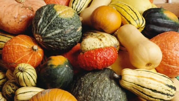 how-to-can-winter-squashes-and-pumpkins-an-illustrated-guide