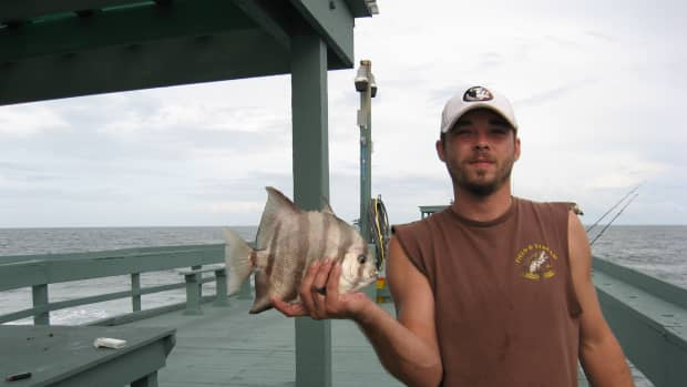 saltwater-fishing-tips-how-to-catch-spadefish-or-angelfish
