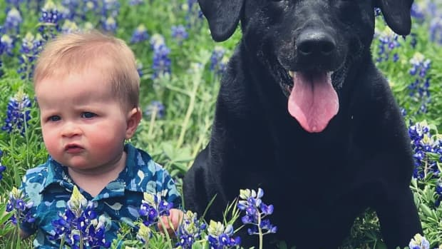 10-reasons-why-labrador-retrievers-make-great-family-pets