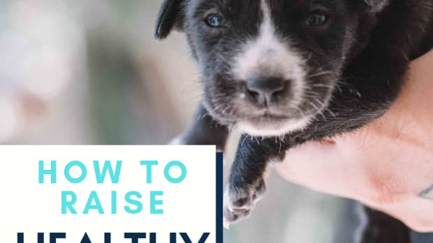 how-to-care-for-orphaned-puppies