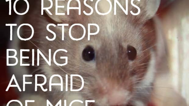 10-reasons-why-not-to-be-scared-of-mice