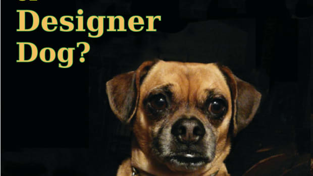 mutt-or-designer-dog-my-experience-with-a-pugsund-or-daug