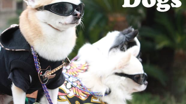 famous-dogs-and-dog-breeds