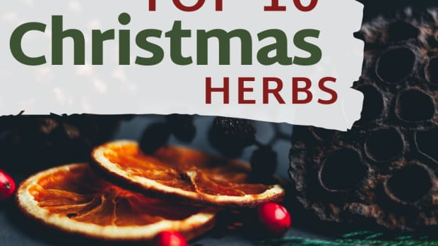 top-10-christmas-herbs-and-spices
