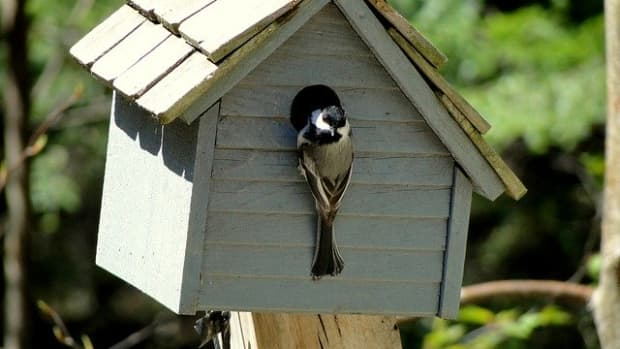 how-to-attract-birds-to-a-birdhouse