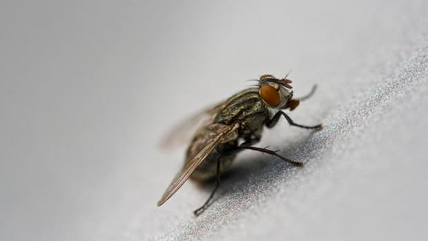 how_to_kill_flies