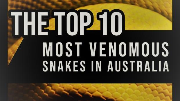 the-top-10-most-venomous-snakes-in-australia
