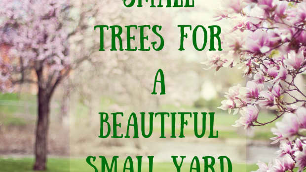 smalltreesforasmallyardorgardentreesunderthirtyfeettall