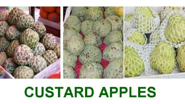 Custard apples have delicious mellow flesh which is soft  almost like custard .