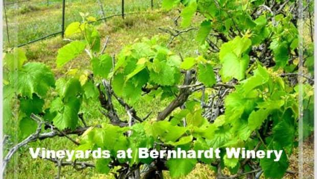 texas-bluebonnet-wine-trail-bernhardt-winery