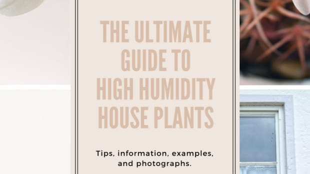 a-guide-to-high-humidity-houseplants