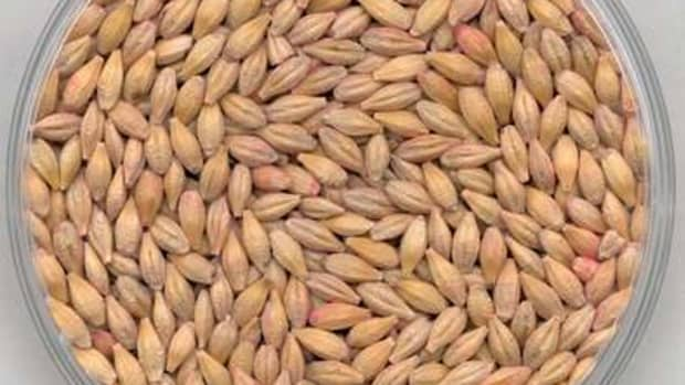 tips-for-cooking-barley-to-make-it-just-a-little-bit-better