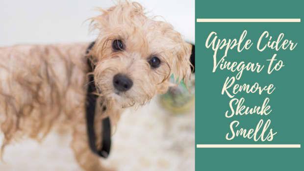 apple-cider-vinegar-to-remove-skunk-smells