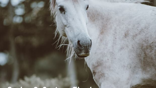 great-horse-quotes