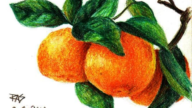 """Tangerines, colored pencil drawing 4"""" x 5"""" by Robert A. Sloan, you may copy this drawing if you credit my HubPages tutorial and link to it when you post it online."""