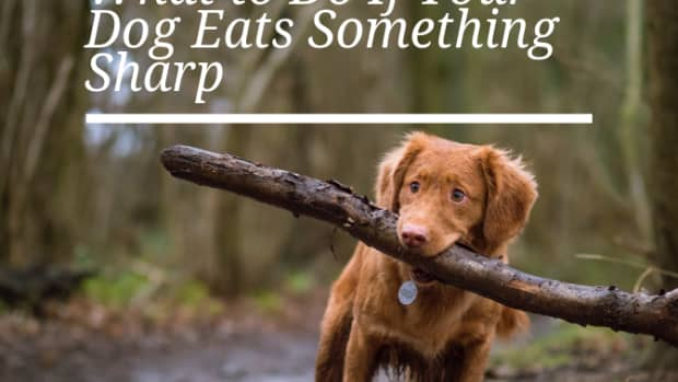 if-your-dog-swallows-something-sharp