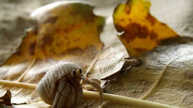 setting-up-a-crabitat-choosing-a-substrate-for-land-hermit-crabs