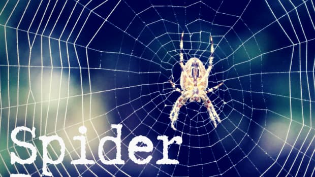 spiders-in-a-dream-interpreting-spiders-as-dreams-symbols