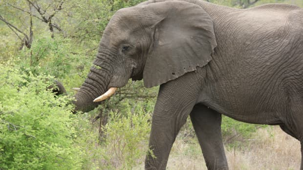 national-parks-in-south-africa-a-brief-history-of-the-kruger-national-park