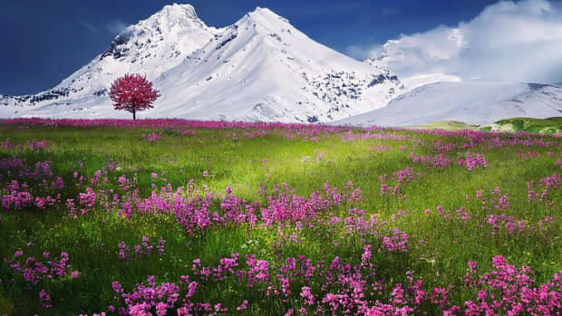 into-the-meadow-land