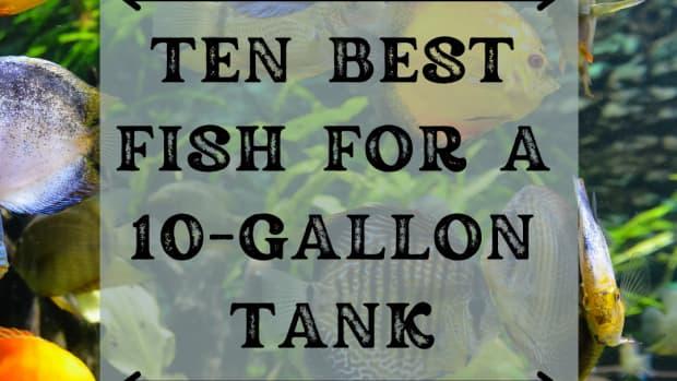 best-fish-for-10-gallon-tank