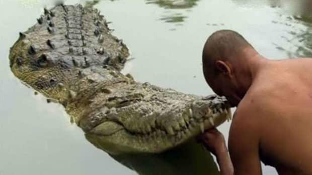 meet-babiya-the-only-vegetarian-crocodile-in-the-world