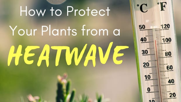 4-simple-ways-to-protect-your-garden-during-a-heatwave